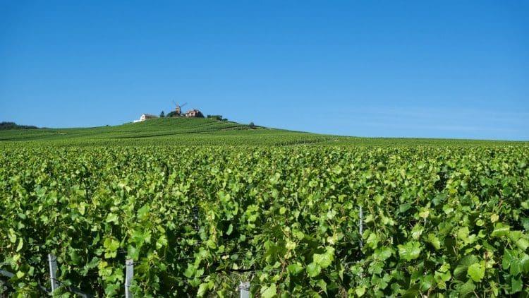 REIMS: Champagner, Weinberge und französisches Flair… Eine Reise in die Champagne Region