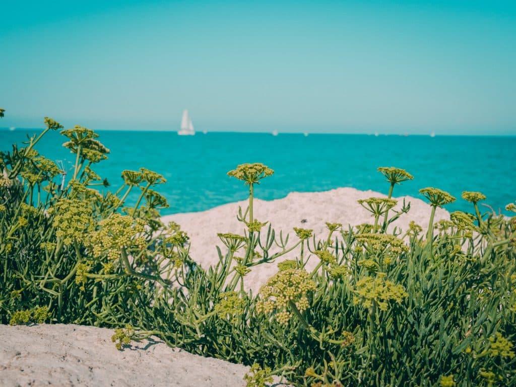 Strand und Meer Île de Ré Frankreich